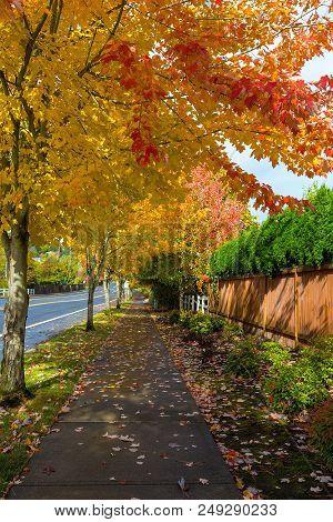 Tree Lined Sidewalk In North American Suburban Neighborhood During Fall Season