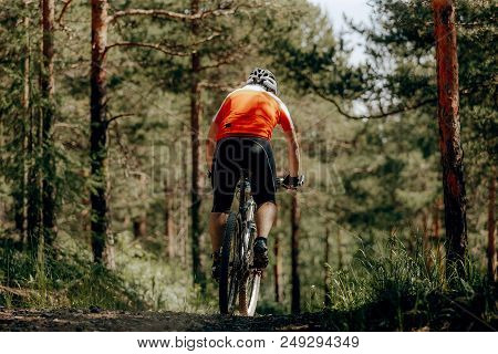 Back Male Cyclist Riding On Pines Forest Trail On Mountainbike