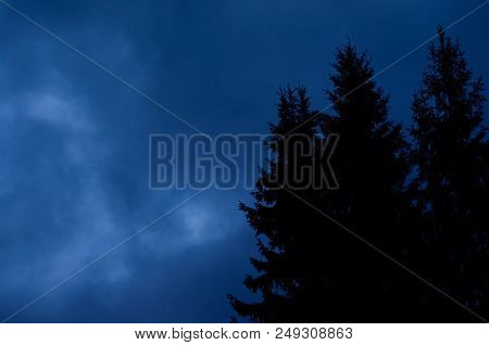 Mysterious Nocturnal Night Cloudy Sky Against Mystery Silhouettes Of Fi Trees.