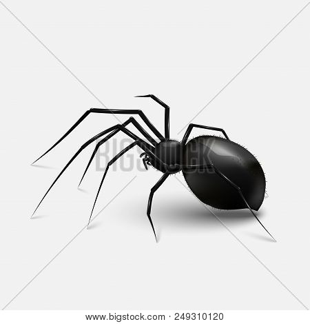 Stock Vector Illustration Realistic Black Spider. Light Gray Background Eps 10