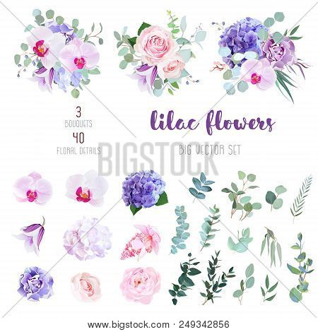 Violet And White Hydrangea, Pink Rose And Ranunculus, Purple Carnation, Lilac Orchid, Iris, Medinill