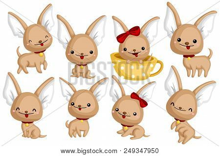Chihuahua Vector Set With Many Dog Pose