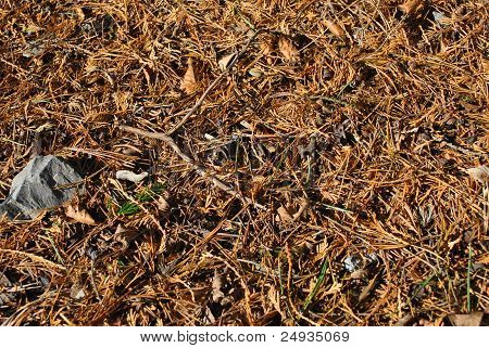 pine needles and pine cones on a forest floor poster
