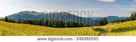 Beautiful Panorama Of Summer Landscape In Mountain. Beech Forest On A Grassy Meadow. Huge Mountain I
