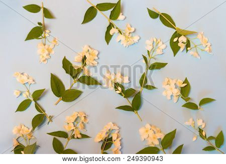 Floral Background With White Jasmine Flowers. Selective Focus.