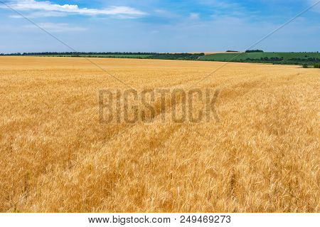 Field With Ripe Wheat At Summer Season Near Dnipro City, Ukraine