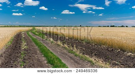 June Ukrainian Rural Landscape With Wheat Fields And Earth Road Between Them