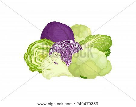 Still Life From Various Varieties Of Cabbage. Vector Illustration. Composition From Cauliflower, Red