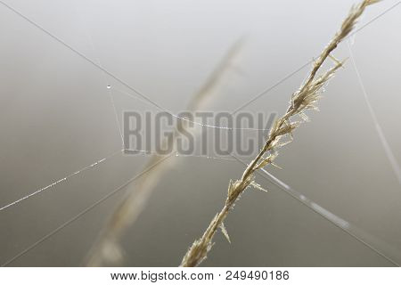 Close-up Of Wet Dew On A Spider Web In The Early Morning Fog