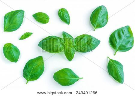 Fresh Basil Leaves Isolated On White Background. View From Above To Green Isolated Basil Leaves. Nat