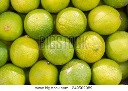 Lime Harvest. Many Green Limes. Lime Background. Limes From Tree. Lime Harvest. Many Limes. Perfect