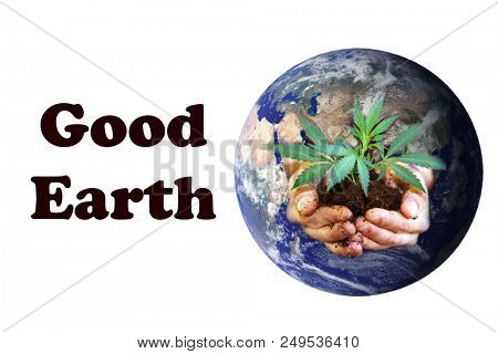 Planet Earth with a human hands holding a Real Marijuana Plant in dirt. Represents Nature and Earth growing plants for human and animal use. Room for text. Elements of this image furnished by NASA