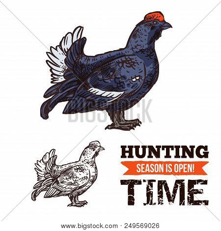 Hunting Season Open Poster With Capercaillie Bird Sketch. Time To Hunt, Turkey Like Grouse And Hunti