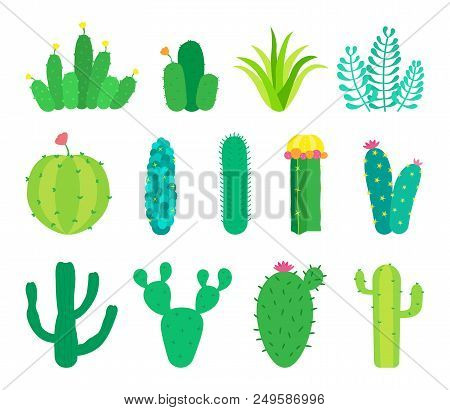 Set Of Cactuses And Succulents. Vector Illustrations.