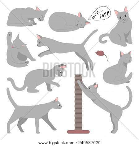 Cute Cartoon Grey Cat In Different Poses. Vector Illustration.