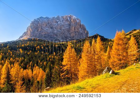 Autumn Scenery In Dolomite Alps With Beautiful Yellow Larch Trees And Sassolungo - Langkofel - Mount