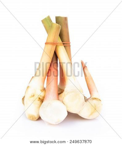 Young Galangal Isolated On White Background, Herb And Medical Concept