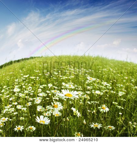 Flower field,blue sky and rainbow.