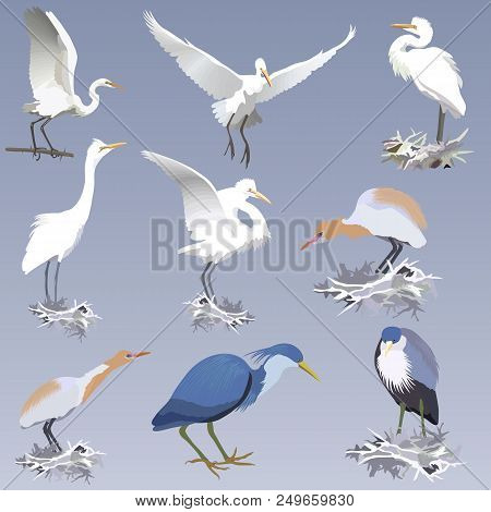 Set Of Realistic Herons Of Different Species In Different Postures -  On The Nests, On A Branch.  Pi