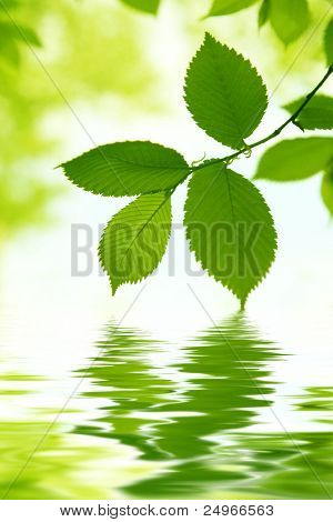 Green leaves and water reflection.