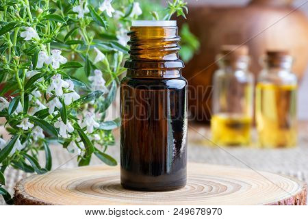 A Bottle Of Mountain Savory Essential Oil With Fresh Blooming Satureja Montana Plant