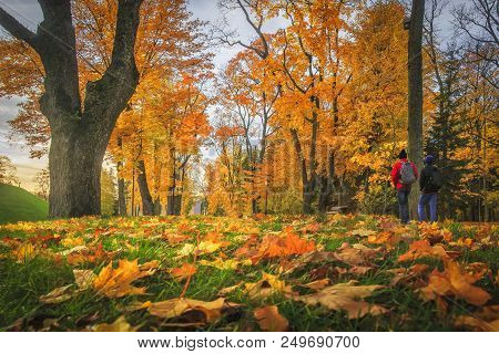 Amazing Autumn. Autumn Leaves In Colorful Park. Fall Landscape. Yellow And Red Trees In Alley. Two M