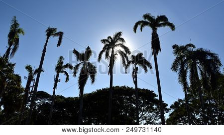 Silhouette Of Palm Trees. Palm Tree With Blue Sky Background On A Sunny But Windy Day.