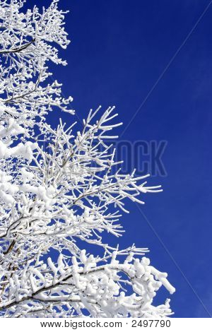 Frosted Tree Against Blue Sky