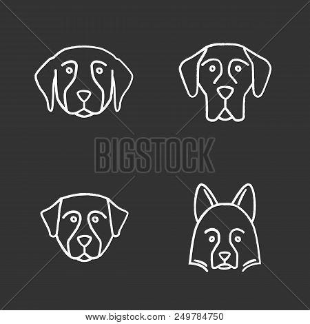 Dogs Breeds Chalk Icons Set. Golden Retriever, Great Dane, Bernese Mountain Dog, Shetland Sheepdog.