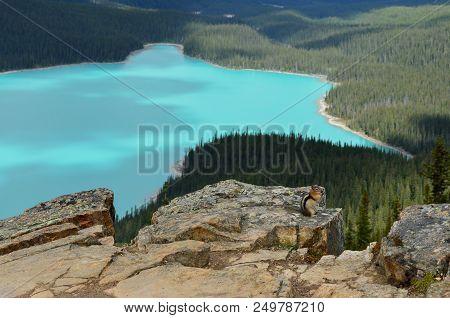 Peyto Lake Squirrel
