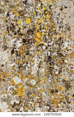 Natural lichen organisms on gravestone concrete forming a totally natural organic abstract art background image in the style of expressionist drip painting. poster