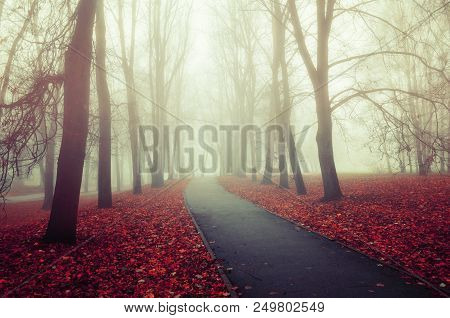 Autumn nature - misterious autumn view of autumn park alley in dense fog. Autumn foggy landscape scene, colorful autumn foggy landscape. Autumn deserted park alley in dense autumn fog