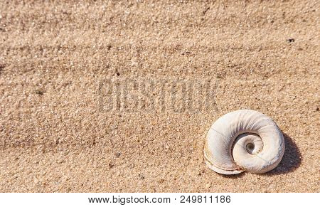 Seashell On A Beach Sand. Summer Background With An Empty Textspace