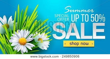 Summer Sale Web Banner, Background With Daisy Flowers Chamomiles. Seasonal Discount. Vector Illustra
