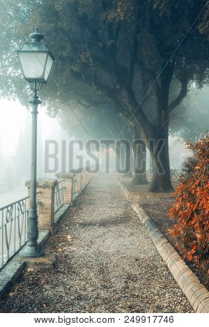 A Misty Morning Autumn Landscape, An Old Park Foggy Alley. Great Oak Tree City Park Alley