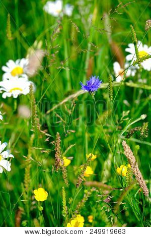 Close Up View Of Wild Flowers In A Meadow Grass