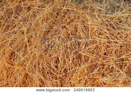 A Close Up View Of Cut Straw In A Field