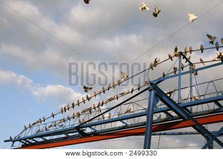 Pigeons sit all together on a line of a lifting crane poster
