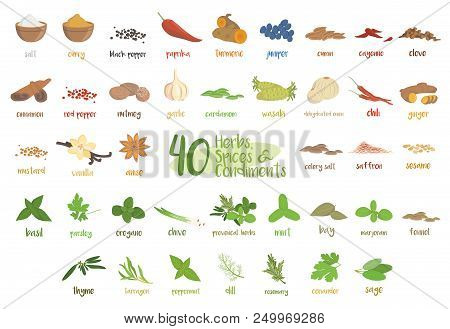 Set Of 40 Different Culinary Herbs, Species And Condiments In Cartoon Style.