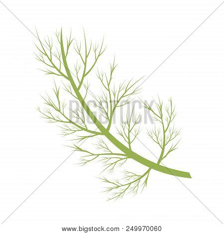 Vector Dill Illustration Isolated In Cartoon Style. Herbs And Species Series
