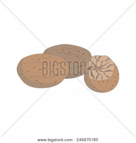 Vector Nutmeg Illustration Isolated In Cartoon Style. Herbs And Species Series