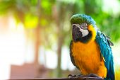 Macore bird, ma core bird Lovely and lovable pet parrot from the Amazon jungle. poster