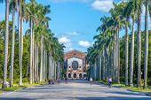 Royal Palm Boulevard in Taiwan University in taipei poster