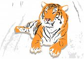 Laying tiger poster