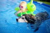 An old, loyal, German Shepherd Mix Breed senior dog is swimming in his shallow backyard above ground swimming pool with his baby girl, who is in goggles and a float. poster
