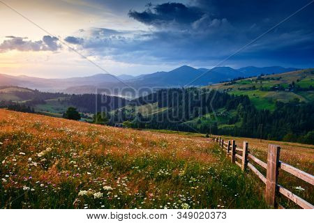 wildflowers, meadow and beautiful sunset in carpathian mountains - summer landscape, spruces on hills, dark cloudy sky and bright sunlight