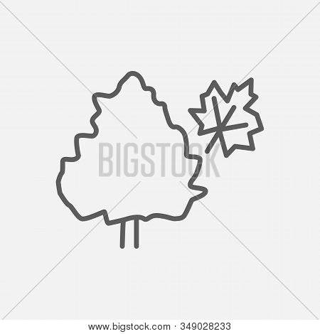 Maple Tree Icon Line Symbol. Isolated Vector Illustration Of Icon Sign Concept For Your Web Site Mob
