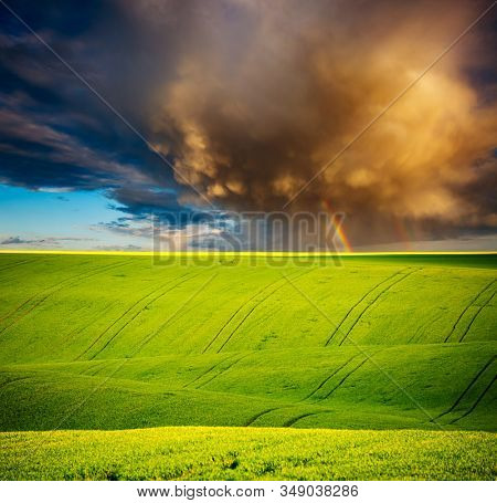 Vivid green field of fresh wheat on the springtime. Location place of Ukrainian agrarian region, Europe. Photo of picturesque rural area. Agrarian industry. Perfect wallpapers. Beauty of earth.