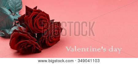 Valentine's Day Concept Valentine's Day. Roses And Candy Hearts On A Red Wooden Background. Valentin