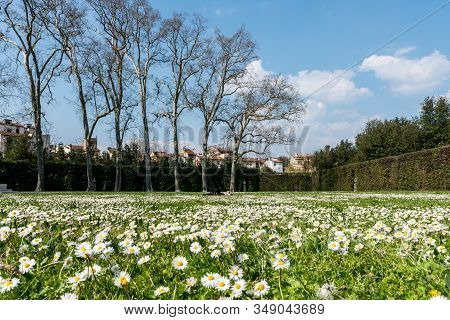 Florence, Italy - 26, March, 2016: Wide Angle Picture Of Beautiful Garden With Daisy Flowers At Bobo